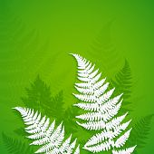 White paper fern leaves on green background