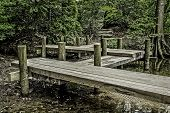 Pier in the woods