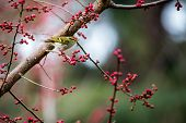 A bird sitting at the edge branch with flowers