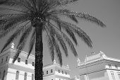 Palm Tree And White Colonial Buildings In Cadiz. Spain