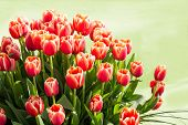 Bright Red Tulips