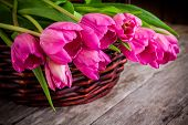 Bouquet Of Pink Tulips In The Basket Closeup