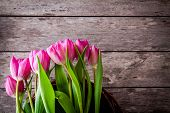 Bouquet Of Pink Tulips In The Basket
