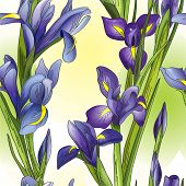 stock photo of purple iris  - Seamless background with blue and purple irises - JPG