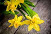 pic of bouquet  - bouquet of bright yellow narcissuses closeup on a rustic wooden background - JPG