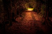 image of mystery  - Mystery path throw the woods - JPG
