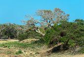 foto of jungle exotic  - Exotic nature in the jungles of Sri Lanka - JPG