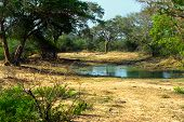 stock photo of jungle exotic  - Exotic nature in the jungles of Sri Lanka - JPG