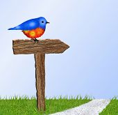 stock photo of grass bird  - Beautiful blue and orange bird sitting on rustic brown wooden sign beside path - JPG