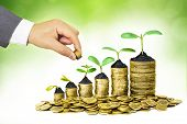 foto of coins  - Hand of a businessman giving coins to a tree growing on golden coins - JPG