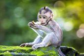 foto of baby-monkey  - Little baby - JPG
