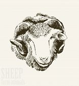 picture of ram  - Vector illustration of engraving ram head close up on white background - JPG
