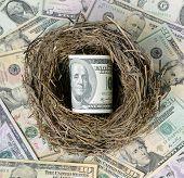 picture of bird egg  - Dollars in a bird - JPG