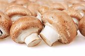 stock photo of champignons  - Champignon Mushroom on white background - JPG