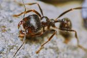 stock photo of ant  - Ant outside in the garden closeup  - JPG