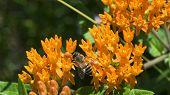 stock photo of weed  - Orange Wildflowers - JPG