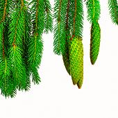 stock photo of pine cone  - The branch of spruce and pine cone on white background - JPG