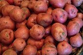 image of solanum tuberosum  - Red new potato background - JPG