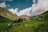 foto of pastures  - Mountain landscape with horses - JPG