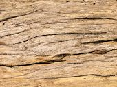 Drift Wood Pattern