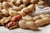 Peanuts arranged on hand woven cotton fabric.  Natural side lighting to emphasize texture.  Macro wi