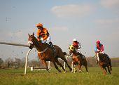 Race Horses 2