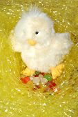 Chick With Eggs8
