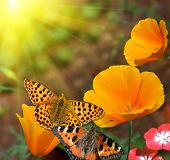 foto of butterfly flowers  - butterflies on flowers - JPG