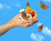 stock photo of monarch butterfly  - hands with butterflies - JPG