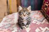 Adorable Little Tabby Kitten Looking At Camera poster