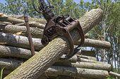Crane Grabbing Pile Of Wooden Logs - Lumber Industry poster