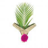 Tropical Woman Concept. Dragon Fruit And Bikini Swimwear On White Background. Flat Lay, Top View. poster