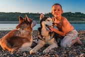 Cheerful Boy Scratches Behind Ear Siberian Husky. Warm, Sunny Summer Evening. poster