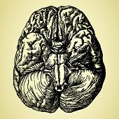 stock photo of thalamus  - old time hand - JPG