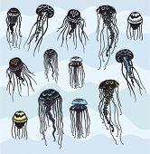 Conjunto de medusas estilizadas