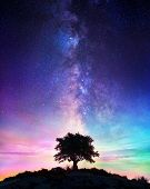 Starry Night - Lonely Tree With Milky Way poster