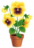 Vector illustration - Pansies in a terracotta pot