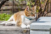 A Beautiful Adult Young Tabby Cat With Blue Eyes And Brown Velvet Wet Nose Lies On A Gray Old Bench  poster