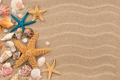 Top View Sand Dunes With Seashells And Starfish As Blank Background. Seashells And Starfish. poster