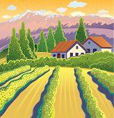 Solar Landscape with vineyard