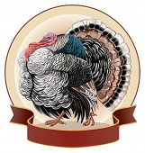 picture of turkey-cock  - Graphical  turkey - JPG