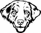 Animal Dog Australian Shepherd 6T6I8Ft.eps poster