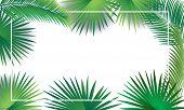 Sukkot And Rosh Hashanah Festival Palm Tree Green Leaves Frame On White Background. Rosh Hashana, Su poster