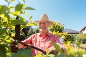 Portrait of a cheerful active senior man using a hedge shear while trimming shrubs in the garden in  poster