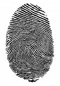 Vector format of finger print.