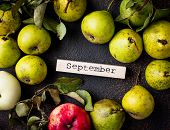 Autumn September Background With Pears. Top View poster