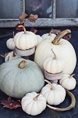 Thanksgiving Or Halloween Autumn Decorations With Heirloom Mini White And Grey Pumpkins And Deer Ant poster