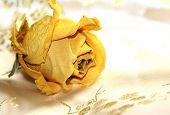 Yellow On Silk