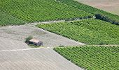 Vineyards Rows, Rural Hut Aerial View. Provence, France