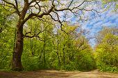 Floresta decídua na primavera